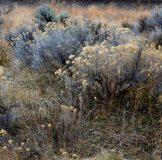 high-desert-flora